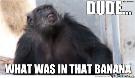 19 Funny Chimpanzee Meme That You Never Seen Before | MemesBoy